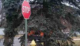 Tree branches obstructing vision at traffic control sign